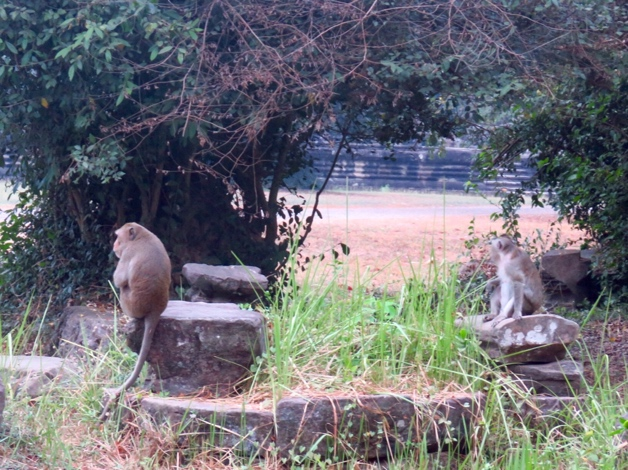 Siem Riep, Cambodia–monkeys outside Angkor Wat